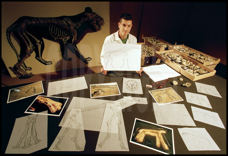 Museum of Natural History in Toulouse, France; the Scientific Rendering. Paleontology laboratory. Dr. Pierre Olivier Antoine is a young French expert on Baluchitherium and has written a  thesis on rhinoceros family fossils (to which Baluchitherium belongs). Thanks to the fossils and the photos made during the excavation, Pierre Olivier Antoine was able to draw scientific rendering of the Baluchitherium skeleton, first limb by limb, then in its entirety.