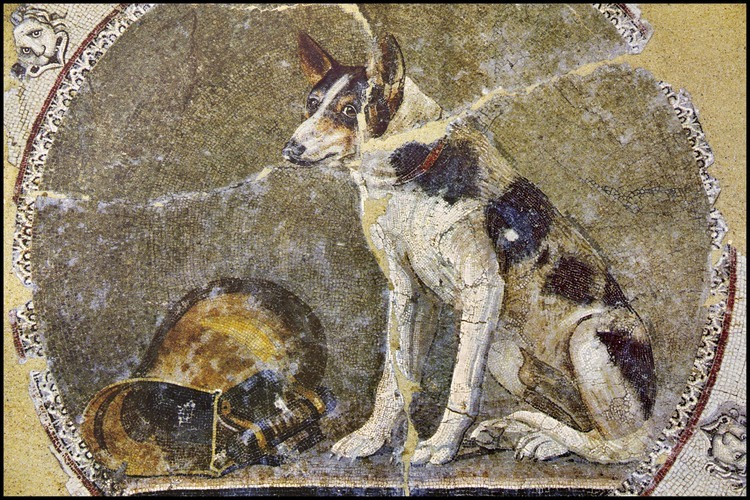 "Discovered on the site of Alexandria's new library, the ""Dog Mosaic"" was incredibly well restored six months ago.  Made with tiles of remarkable quality (some are only several millimeters thick), it is in all the exhibits of Alexandria in the world.  Ptolemaic era, second century BC."